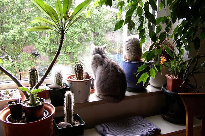 Katzen , Sukkulente und Kakteen Sei ~ 01163053_Unterschied Sukkulente Xerophyten
